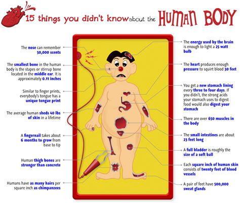 enter your info[ ] body organs picture 1