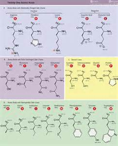 amino acids younger looking picture 2