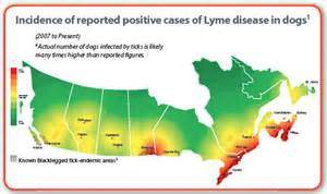 canada.ca/lyme disease picture 1