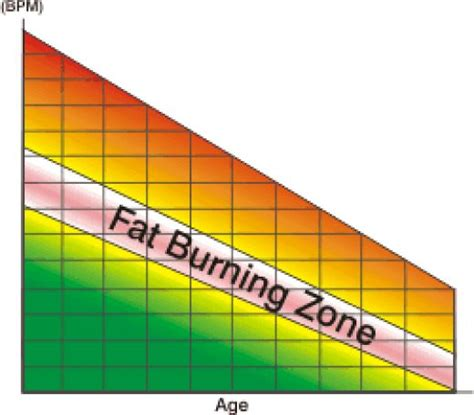 Heart rate fat burning zone picture 11