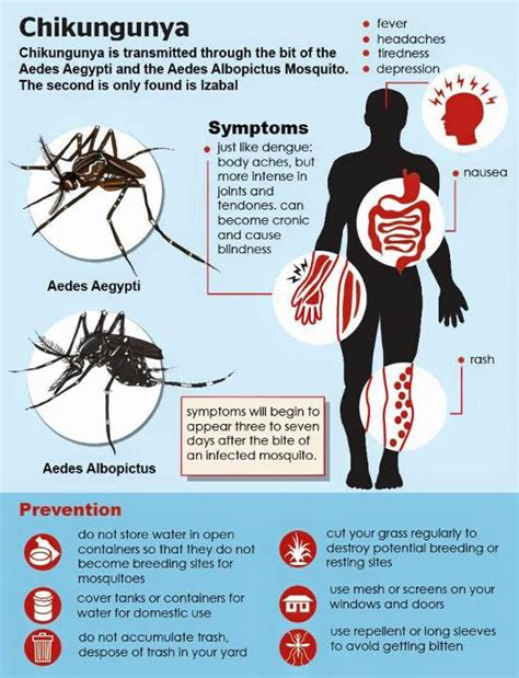 chikungunya virus symptoms and signs picture 7