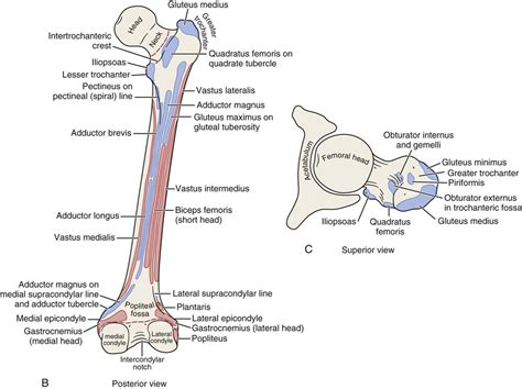 sacroiliac joint picture 10