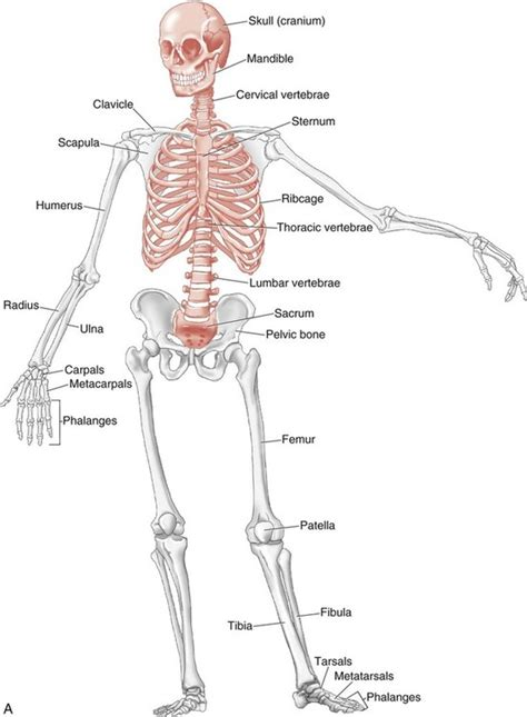 function of joints picture 14