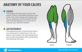 calf muscle exercise picture 17