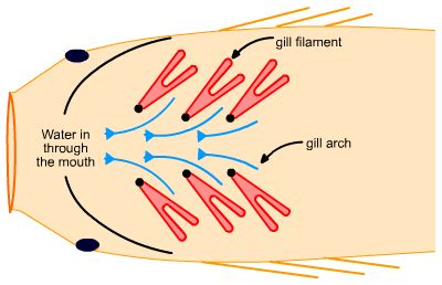 Blood flow of bony picture 6