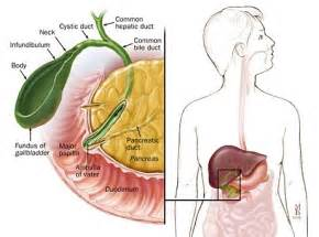 anatomy gall bladder picture 11