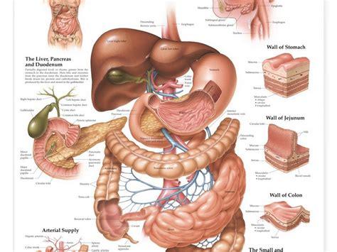 austin texas doctors treating hemorrhoids picture 3