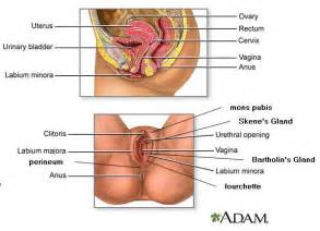 pictures male genital exam picture 5