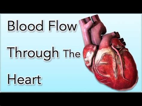 Animation of blood flow though heart picture 4