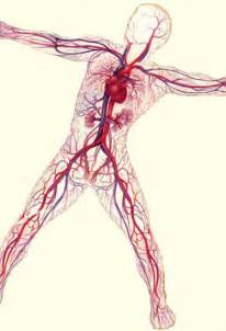 ling me blood circulation picture 9