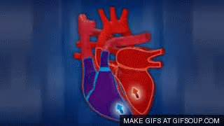 animation of the heart blood flow picture 17