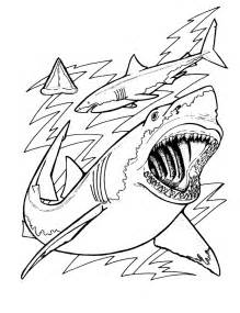 prehistoric sharks h picture 7