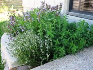 herbal plus oregano picture 3