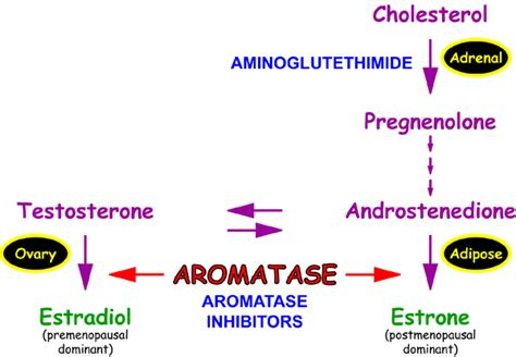 exemestane and cholesterol picture 2