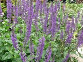 herbal high sticky saliva picture 3