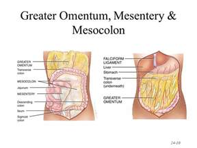 nonrotation of bowel and mesentery picture 1