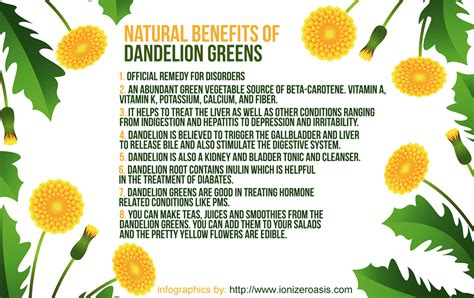red dandelion greens health benefits picture 2