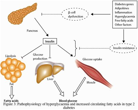 the effect of exercise on liver function picture 1