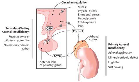 adrenal suppression picture 2