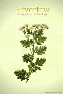 herbal anti-inflammatory picture 3