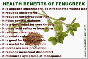 use of fenugreek picture 3