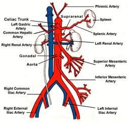 numb abdomenal skin picture 19