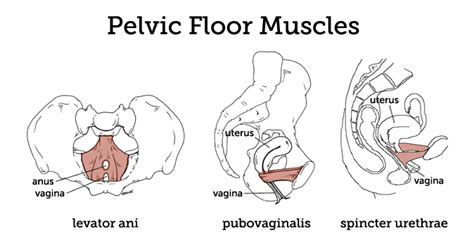 acupressure points for pelvic muscle spasms picture 7