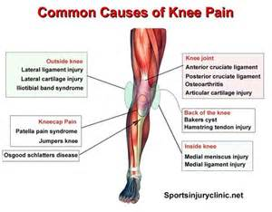 inner knee joint tendon injury picture 2