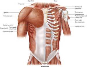 breast muscle strain picture 2
