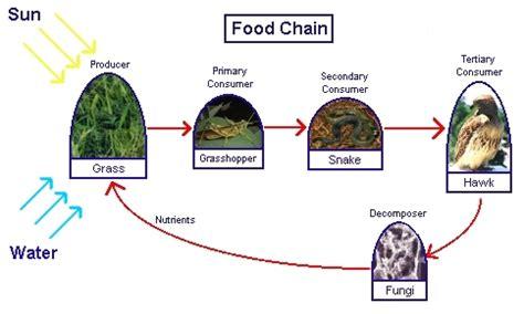 deciduous h in chimpanzees picture 2