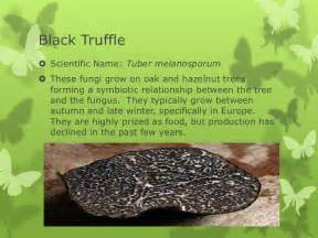 scientific names for fungi picture 5