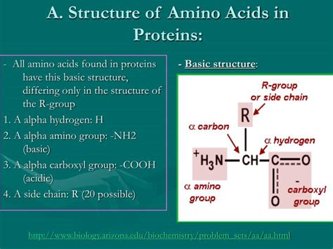 amino acids younger looking picture 3