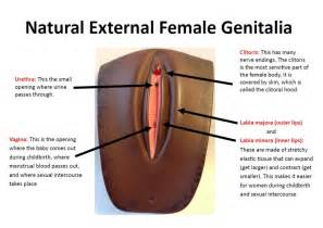 male genitals touching female genitals picture 1