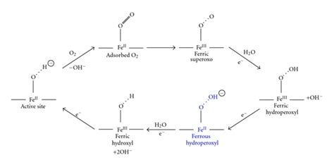 different varieties of dietrine picture 11
