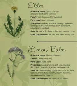 Herbal healer picture 18