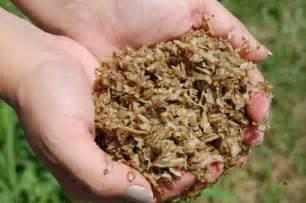 beet root fiber picture 11