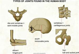 types of joints picture 9