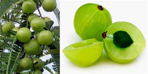 negative side effects of amla powder picture 2