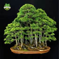 where to buy the life tree purify picture 8