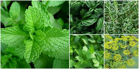 where can i buy puertorican herbs here in picture 3