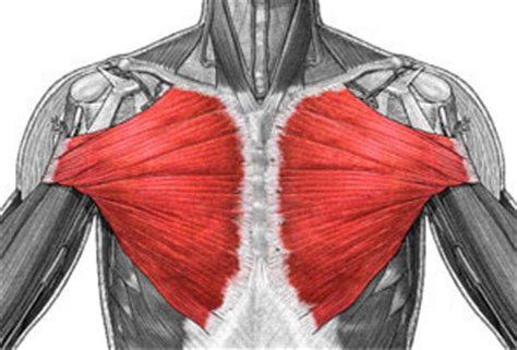 do torn attachments of the pectoralis muscle need picture 16