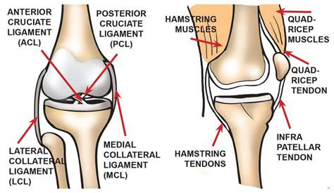diagram of knee joint picture 10