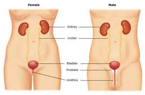 can your bladder rupture naturally picture 3