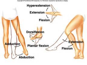 joint flexion rotation anatomy picture 3
