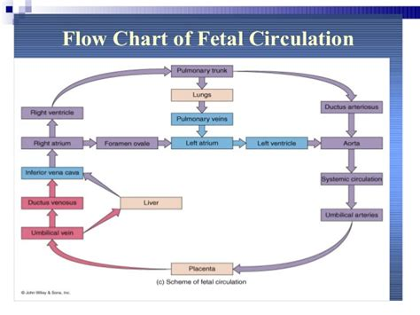 flowchart of blood circulation picture 2