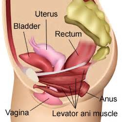 symptoms of a fallen bladder in a female picture 10
