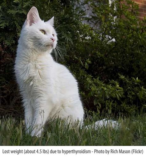 weight loss in cats picture 19