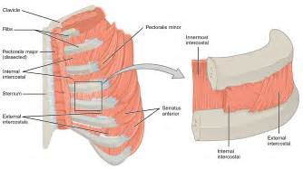 right chest muscle spasms picture 3