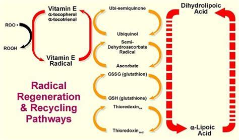 alpha lipoic acid antioxidant picture 5