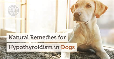 hypothyroid in dogs picture 6